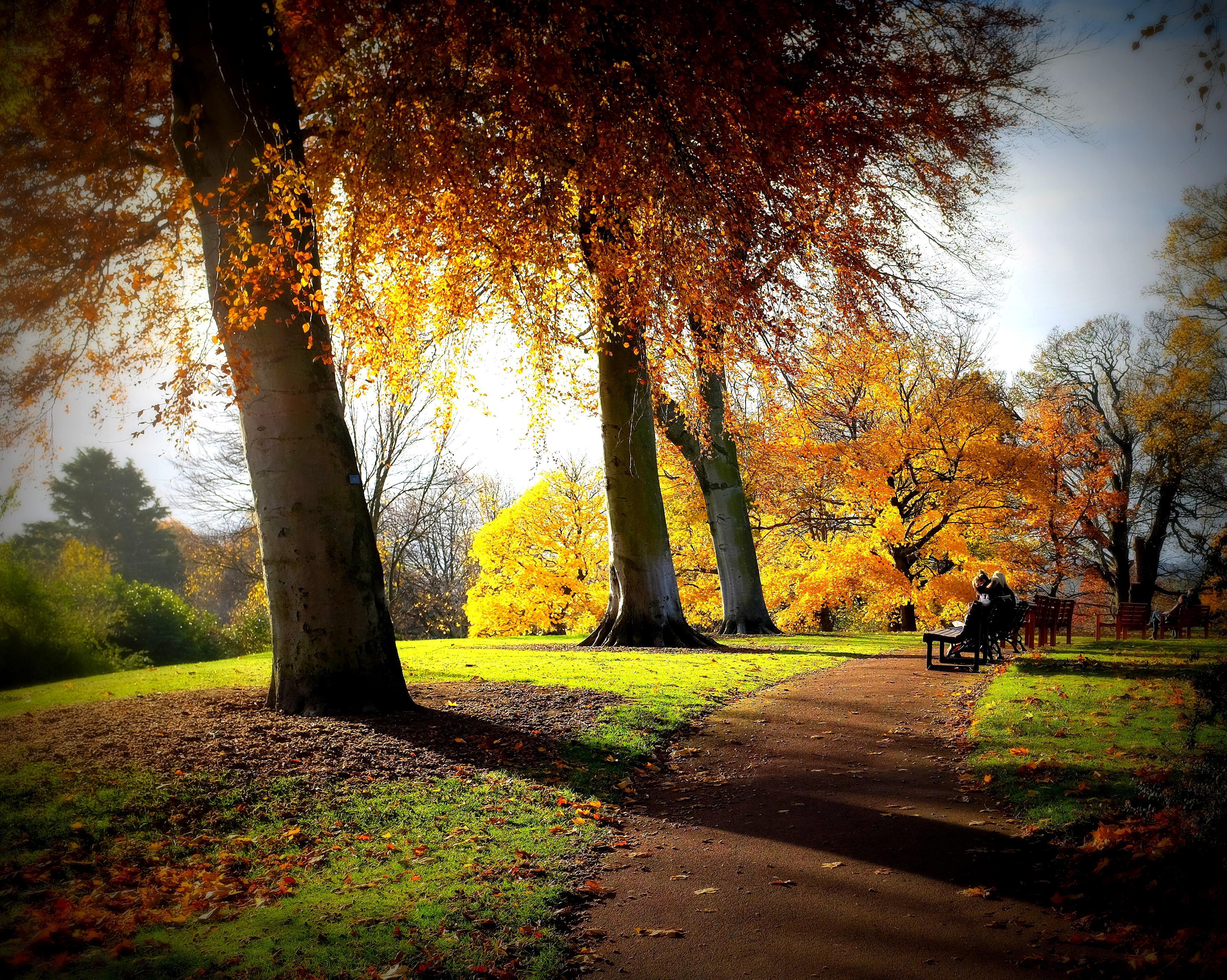 Baumpflege Gartengestaltung Heidelberg