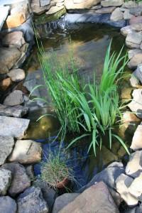 Teich anlegen Gartengestaltung Heidelberg