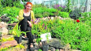 Garten bietet zahlreiche Heilkräuter